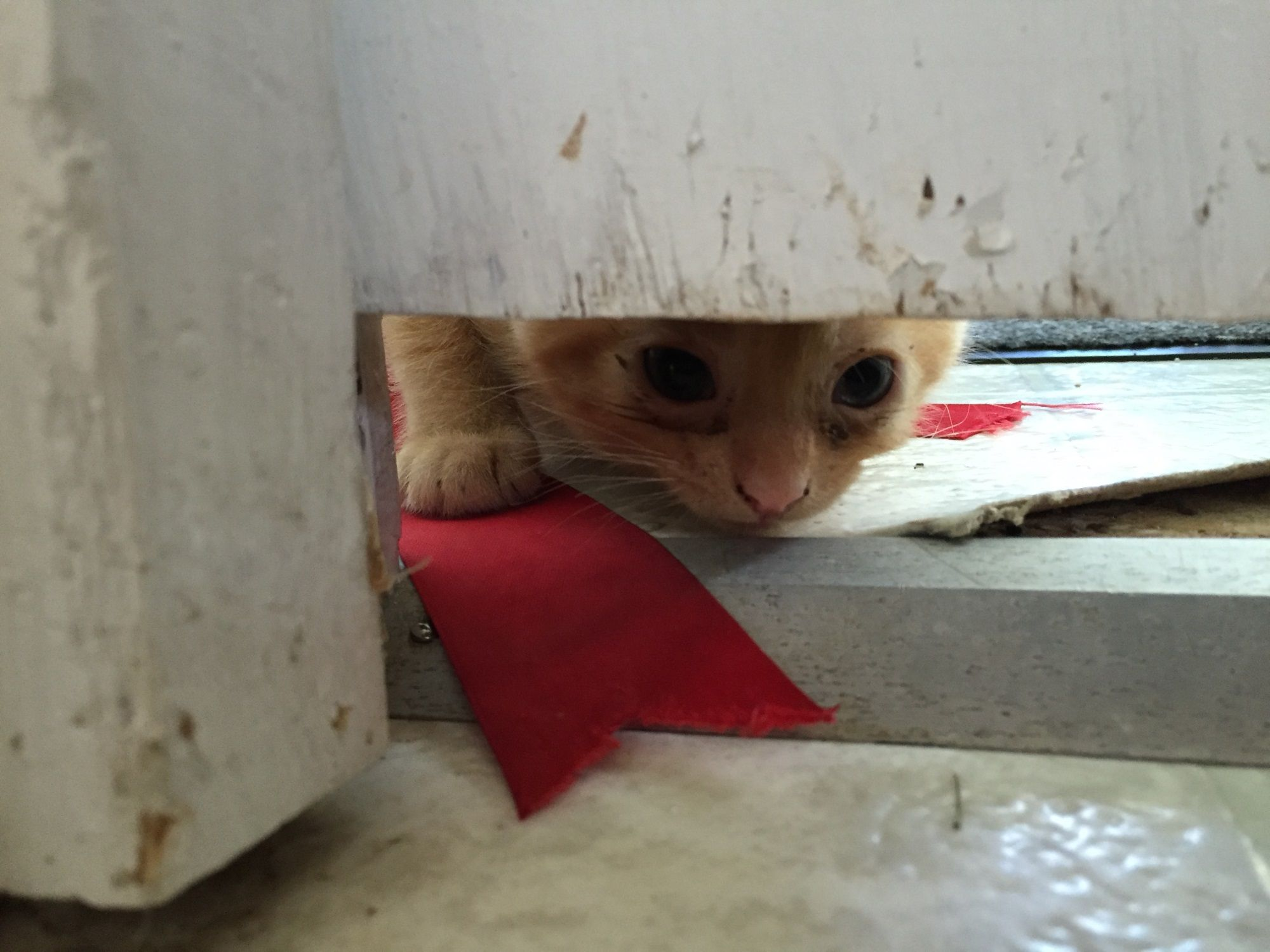 I Can See You Can You See Me Kittens Home Kitten Cats Cat Catsofinstagram Catoftheday Catlover Catstagram Cat Cat Day Cats And Kittens Cat Love