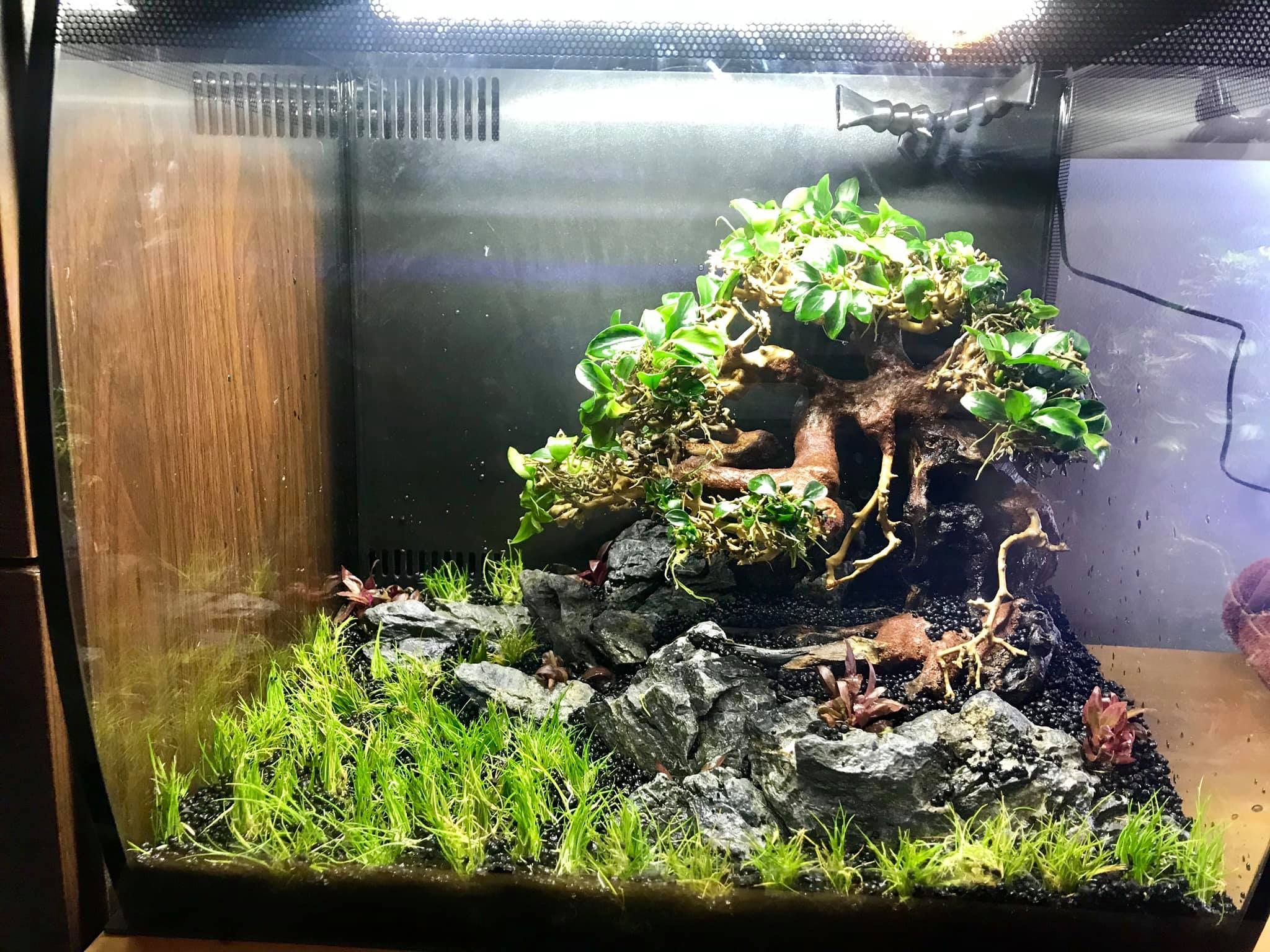 Pin by Natalie Bauld on Fish tanks   Aquascape