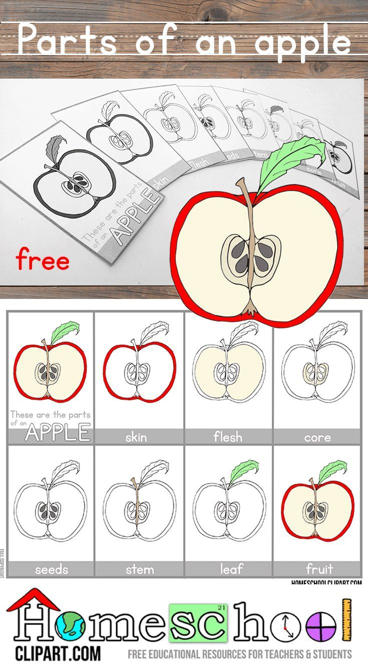 picture about Parts of an Apple Printable titled Pinterest Пинтерест