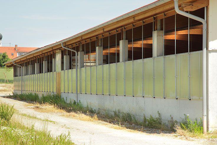 Top Bullenmaststall aus Holz bauen #HaasLandwirtschaftsbau #SD_39