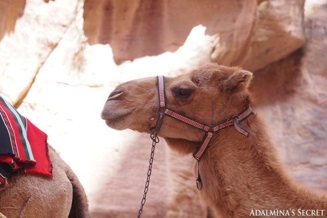 Petra, Jordan - Adalmina's Secret