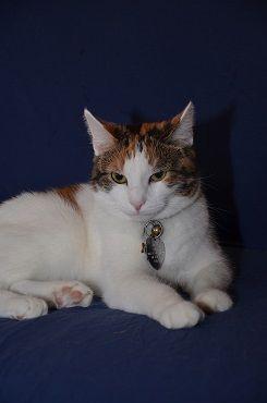 This Is My Grumpy Kitty Pose Grumpy Cat Kittens Kitty
