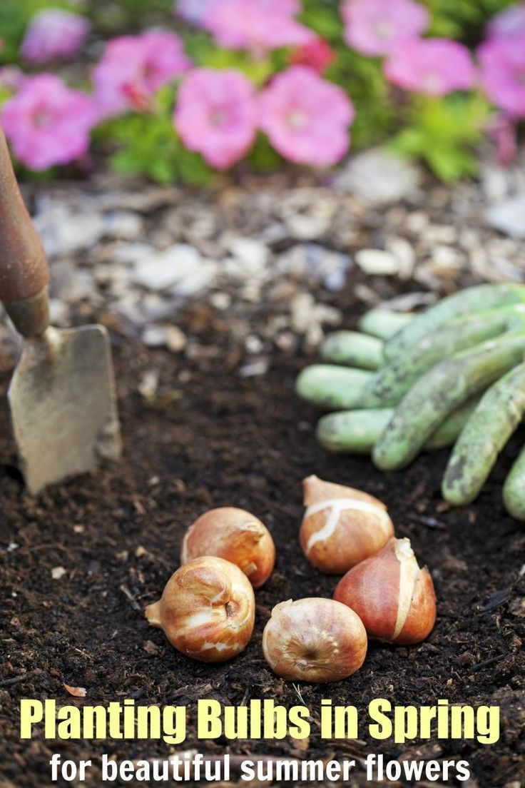 Planting Bulbs In Spring For Summer Flowers Planting Bulbs