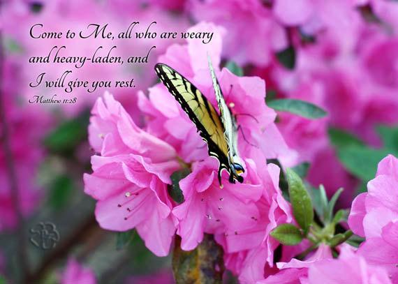 Bible Verse Art - Swallowtail Butterfly Art - Flower Photography ...