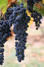 Bucket List : Before I die I want to... Stomp on grapes in a vineyard.
