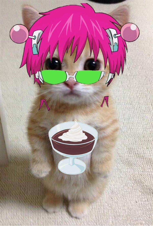 Saiki Pfp Saiki K Anime Kitten Funny Anime Pics Haikyuu Anime