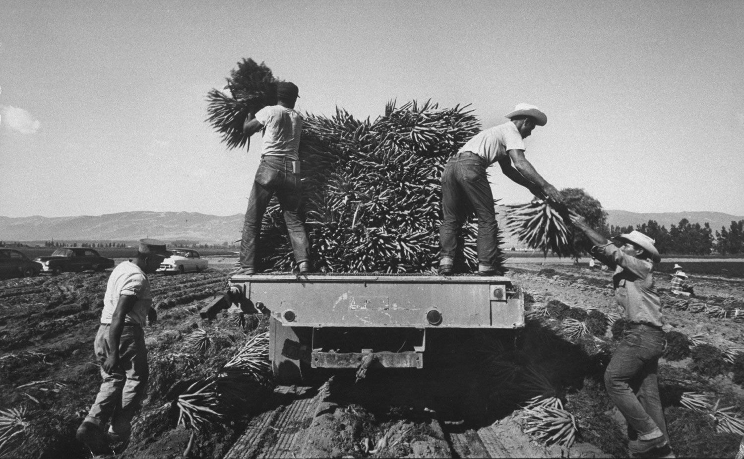 Bitter Harvest: LIFE With America's Migrant Workers, 1959 ...