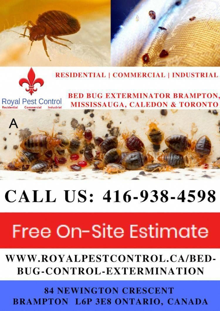 looking for effective & reliable Bed Bug Exterminator