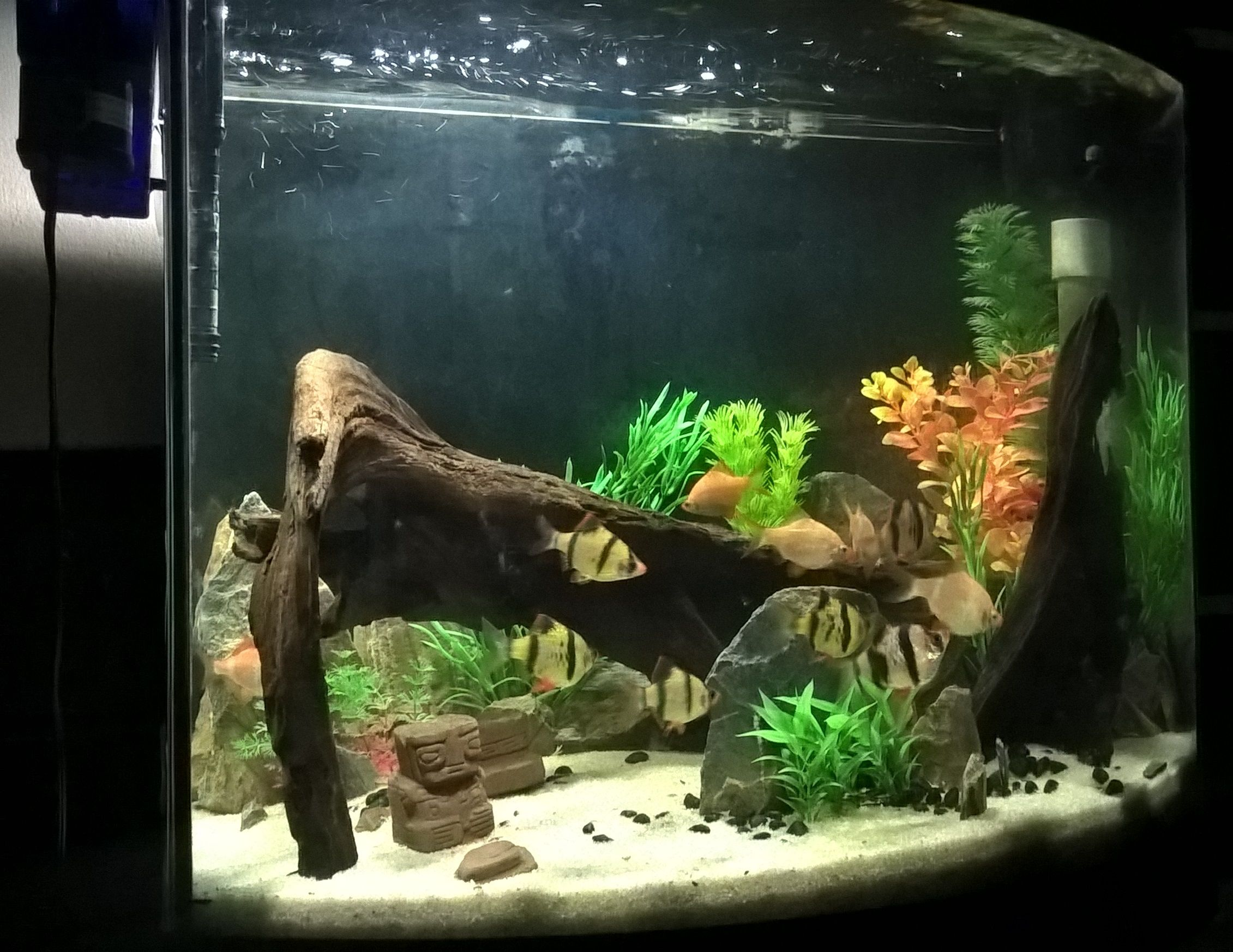 Fish Tanks Fake Plants And Driftwood Tiger Barb Tank