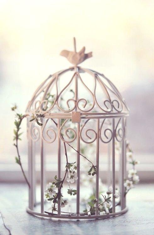 pretty bird cage white flowers.