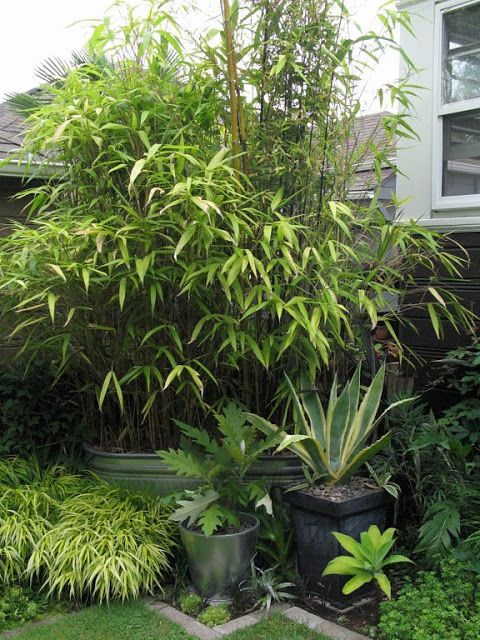 nice combo - bamboo, sanseveria, ? airplane plants?,