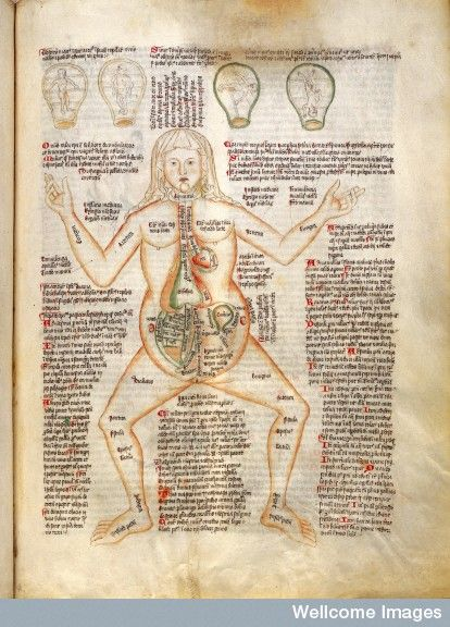 Anatomy of pregnant woman labelled with ailments and the four foetal ...