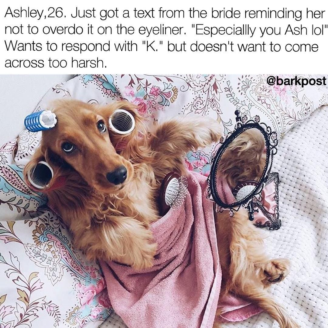 Pin by julia norconk on funnies pinterest animal memes and dog