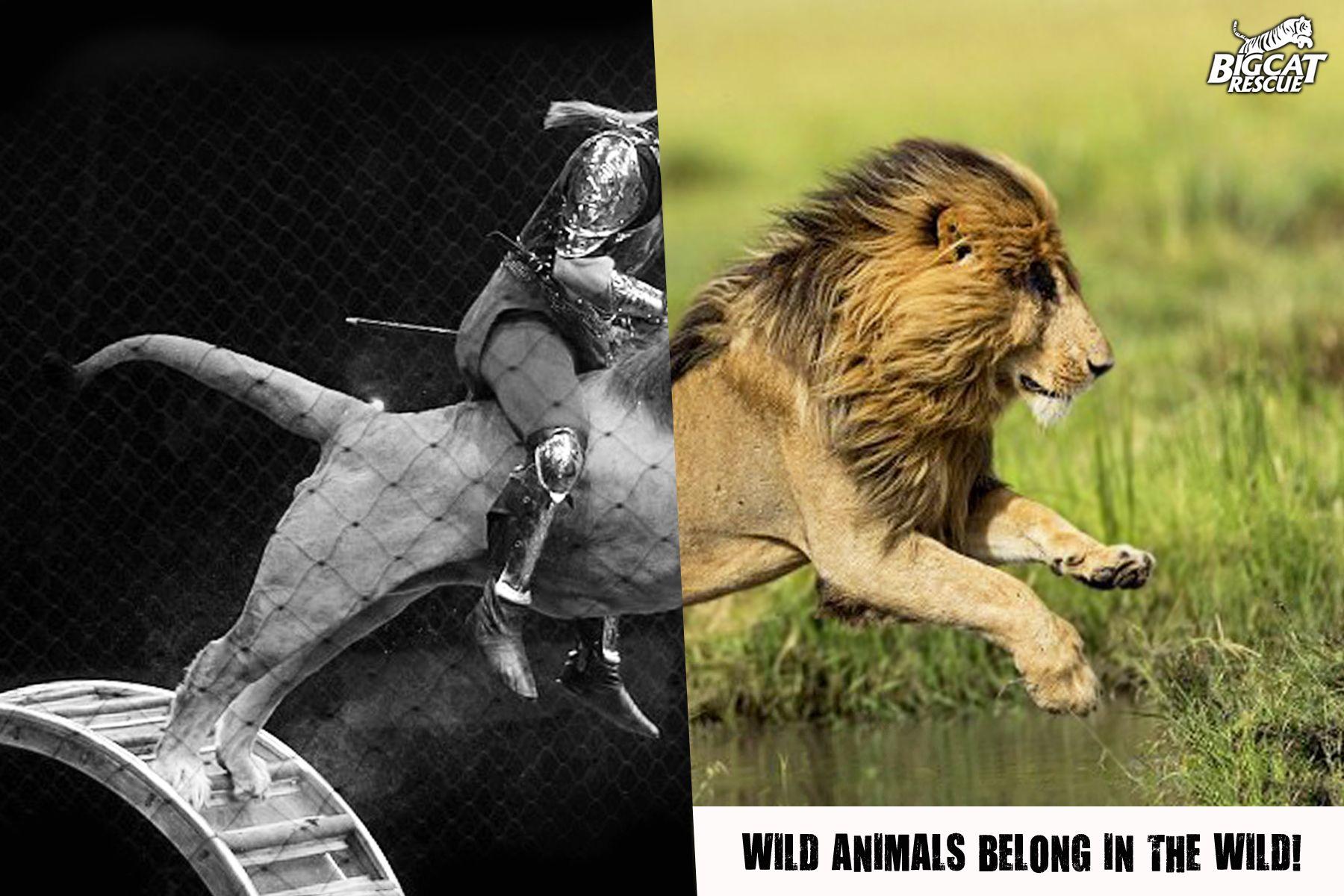 Pin on Animal Welfare