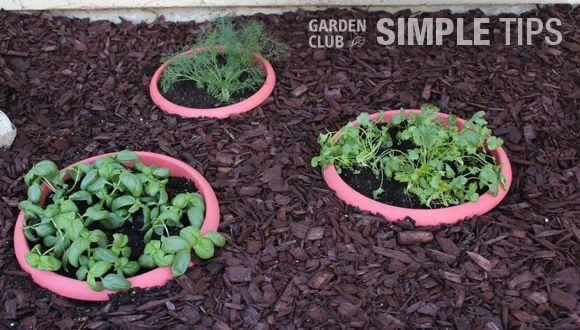 Sunken Garden Diy Buried Pots Container Gardening Vegetables Planting Herbs Container Gardening
