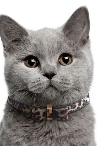 Buy Leopard Print Bow Tie Cat Collar From The Next Uk Online Shop Cat Collars Cats Grey Cats
