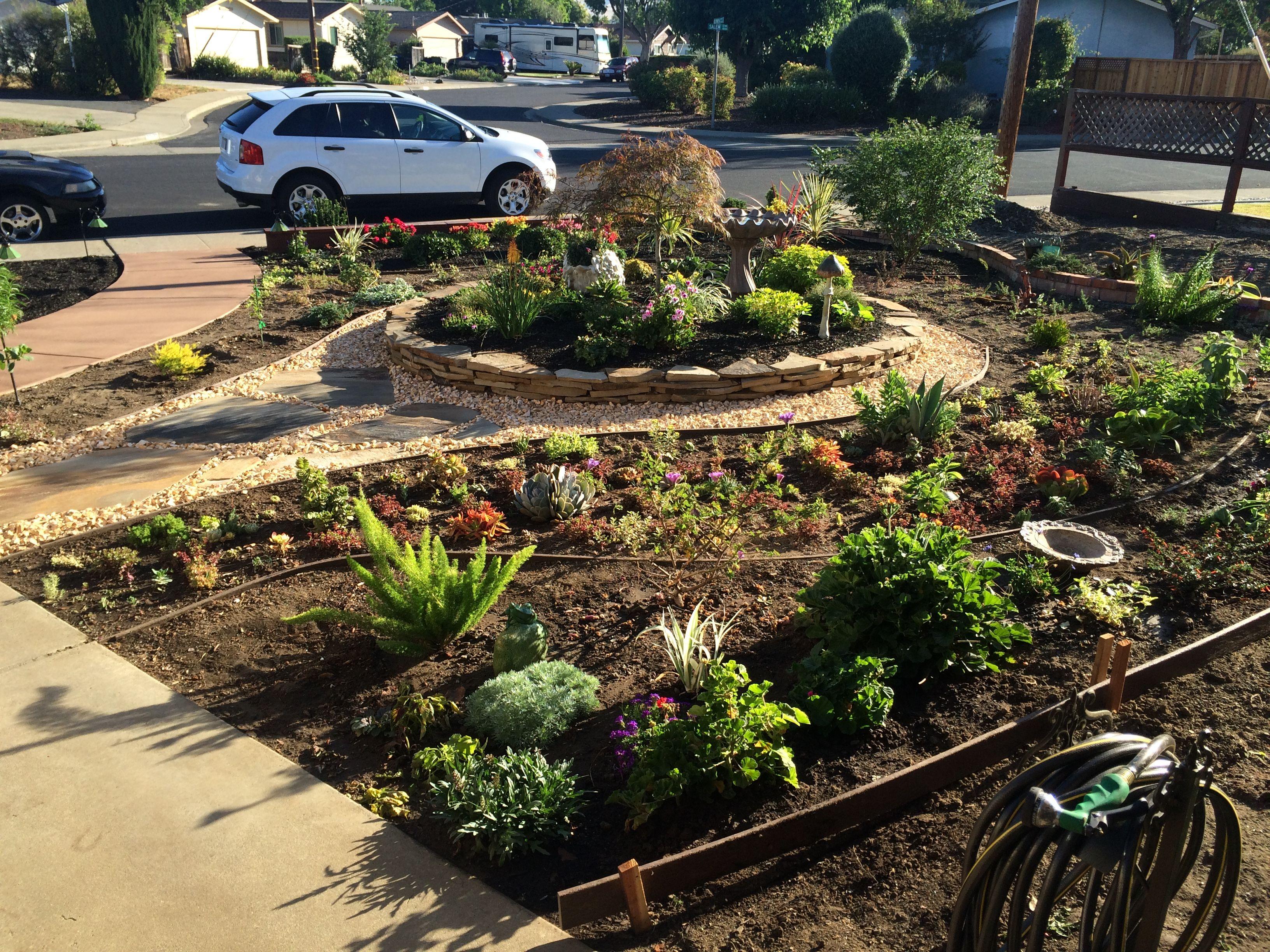 Cactus garden, center circle, flower gardens front yard landscape ...