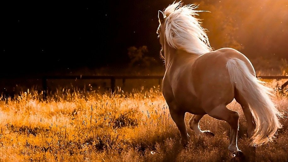 Red Horse Field With Dry Grass Sunset Computer Desktop Wallpapers Horse Wallpaper Horses Palomino Horse