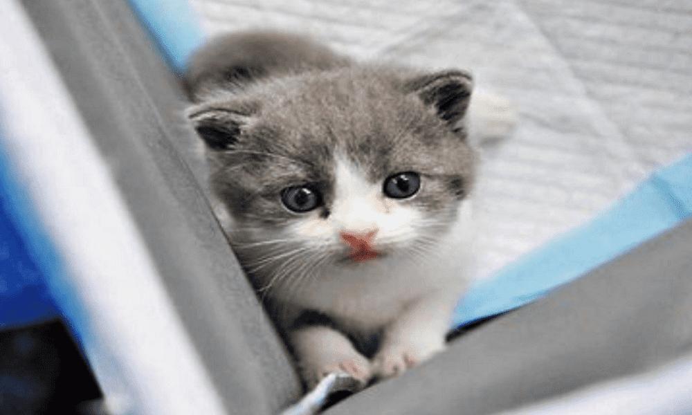 Saluda A Garlic El Primer Gato Clonado De China Kittens Animals Cats