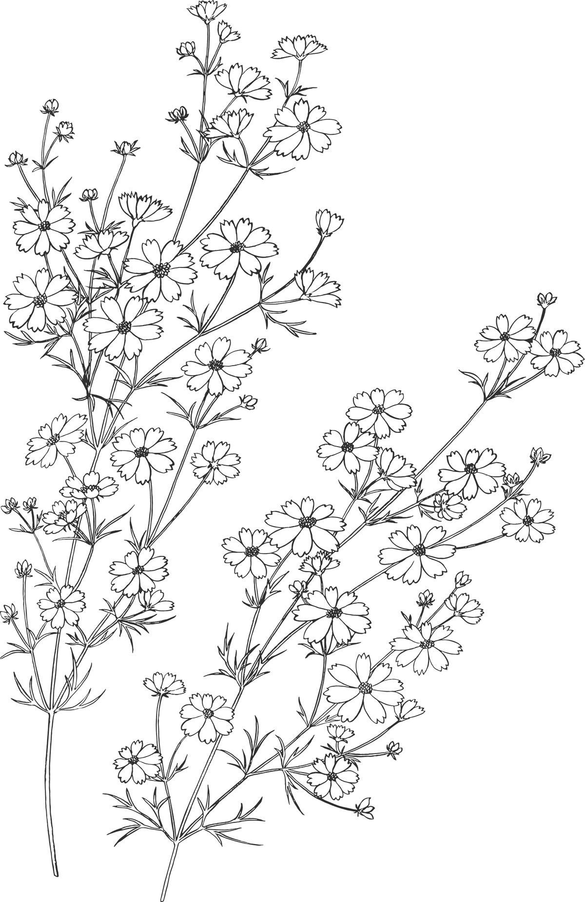 Embroidery pattern flowerg image only jwt decoracion
