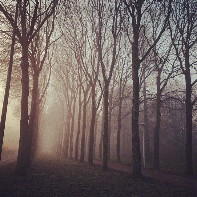 """Fog in this cold morning #fog #morning #nature #trees #forrest #sky #sun #cold #winter #Netherlands #utrecht"""