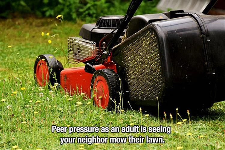 Morning Funny Memes 39 Pics Lawn Mower Push Lawn Mower Lawn Care