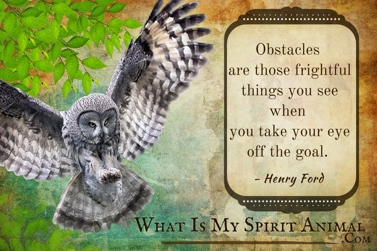 Owl Quotes Amp Sayings
