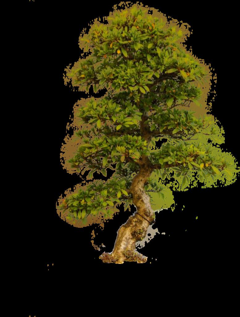 Tree Png By Camelfobia On Deviantart Fantasy Tree Tree Drawing Tree Textures