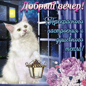 Открытка добрый вечер - красивый котик и корзина с цветами ...