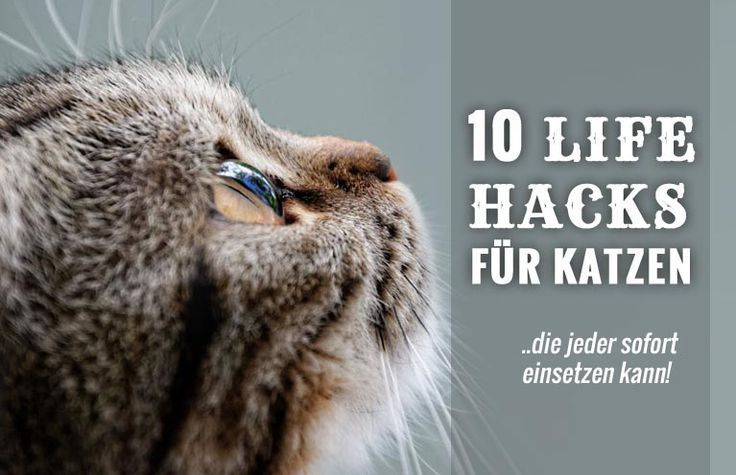Lifehacks für Katzen: 10 Tricks, die jeder Katzenhaushalt wissen muss - Cats - #katzengeburtstag