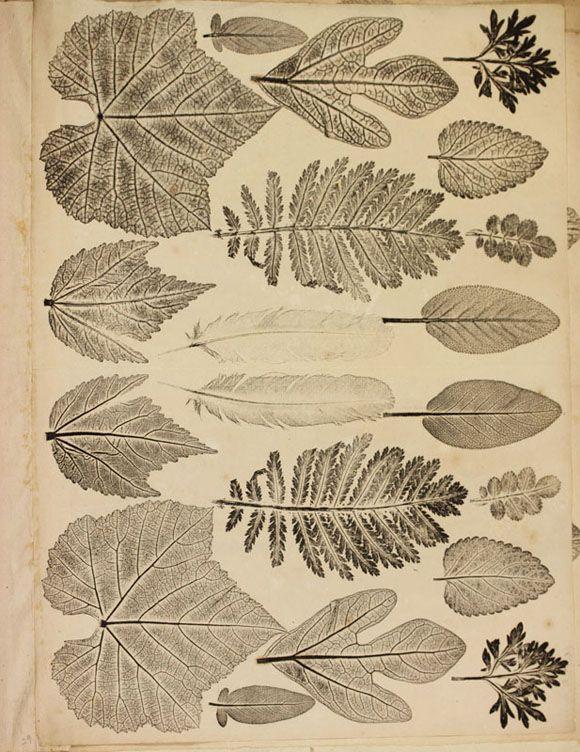 Joseph Breintnall. [Selection of Nature Prints of Leaves], Philadelphia, 1731-1744.
