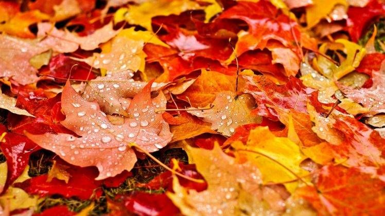 Nature Fall Leaves Maple Leaves Water Drops Depth Of Field Grass Dew Field Colorful Hd Wallpaper Autumn Leaves Wallpaper Fall Wallpaper Leaf Wallpaper Autumn leaves wallpaper hd