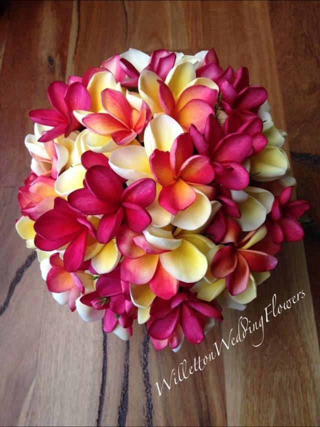 Divine Frangipani Frangipani Wedding Wedding Flowers Plumeria