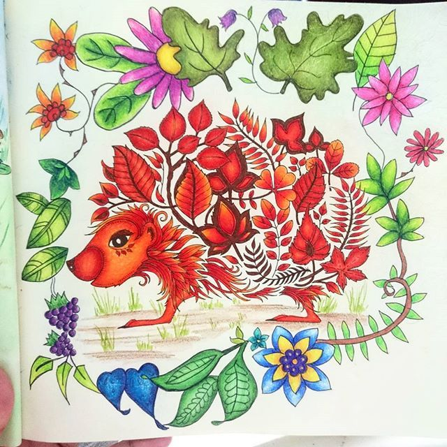 Hedgehog Enchanted Forest Coloring Book Art Joanna Basford Enchanted Forest Enchanted Forest