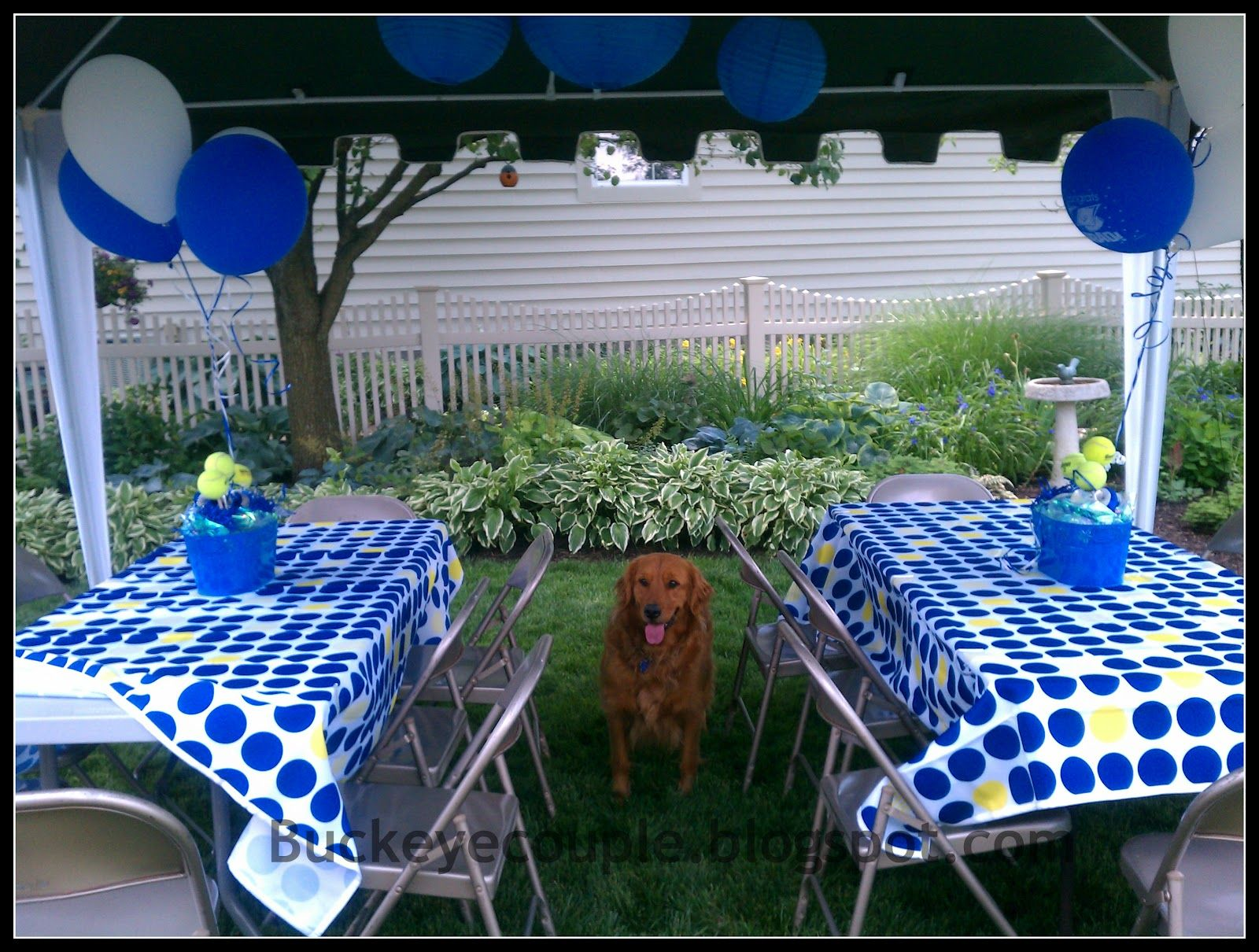 Graduation party set up graduation party decorations for Outdoor decorating ideas for graduation party