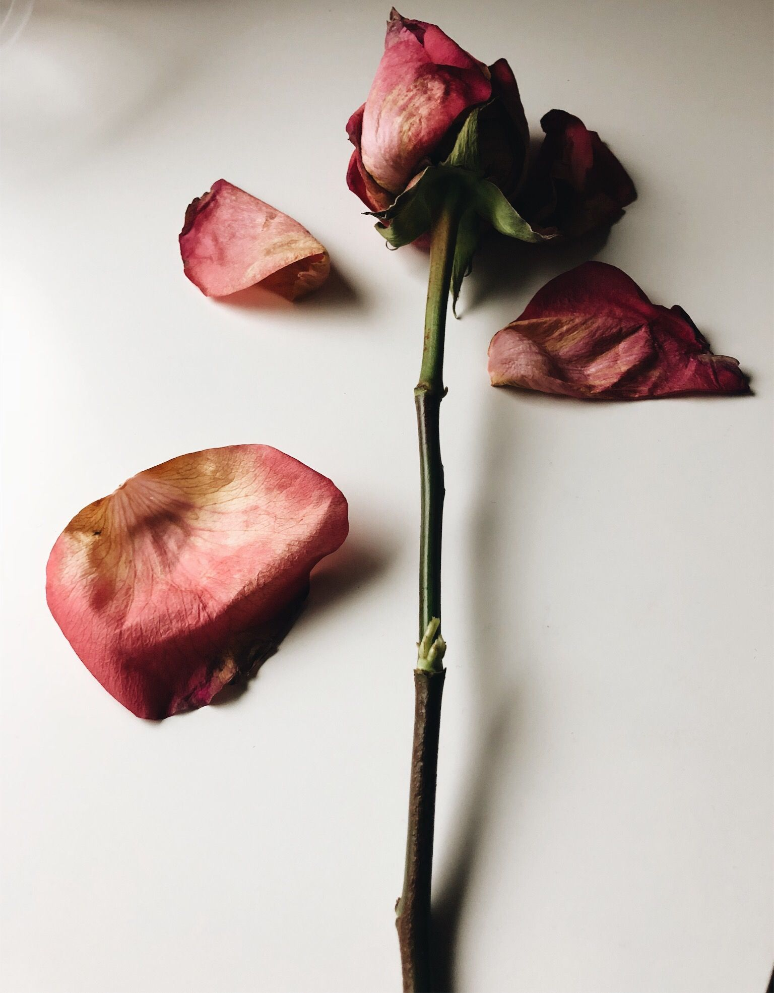 Image result for wilted petals and melted candle wax