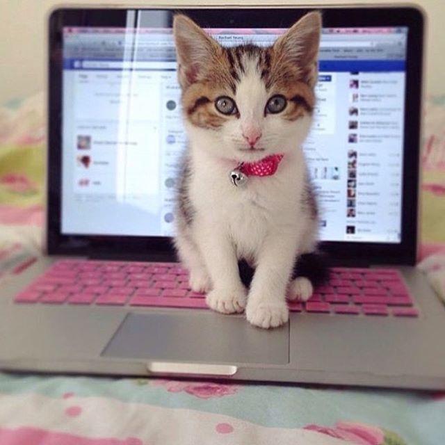""""""" Sono un gatto intellettuale io """""""