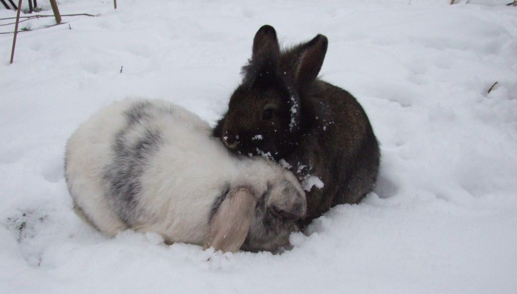 How to keep your rabbits warm or cool rabbit pet