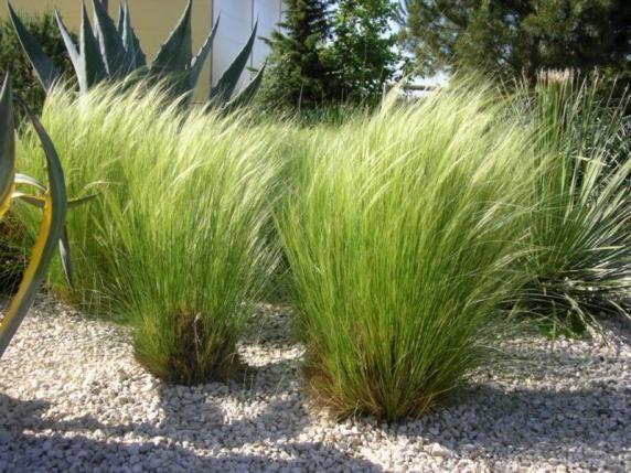 Cr ation de jardin sec m diterran en adapt s la s cheresse montpellier castelnau le lez - Jardin d essence montpellier ...