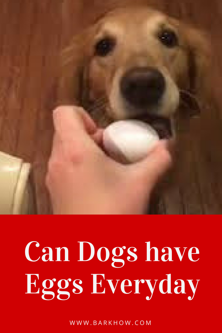 Can I feed my dog eggs everyday Can dogs eat eggs, Eggs