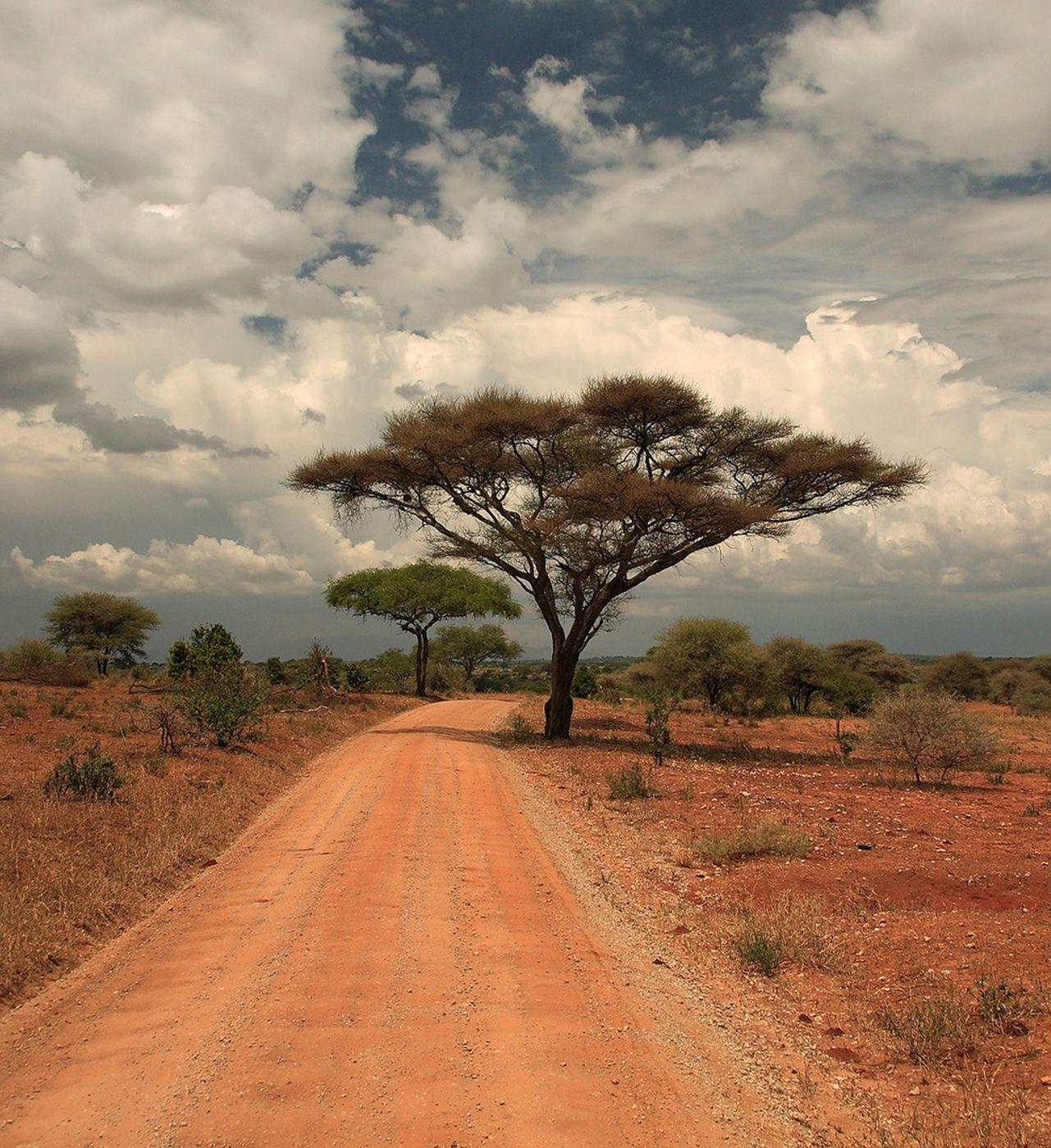 этом случае деласерас африка фото если герцогине приглянулось