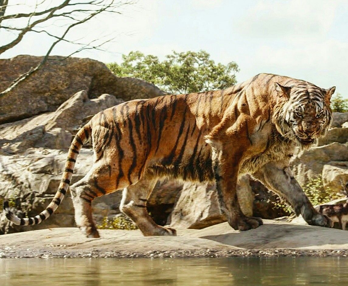 Lion vs tiger in jungle book