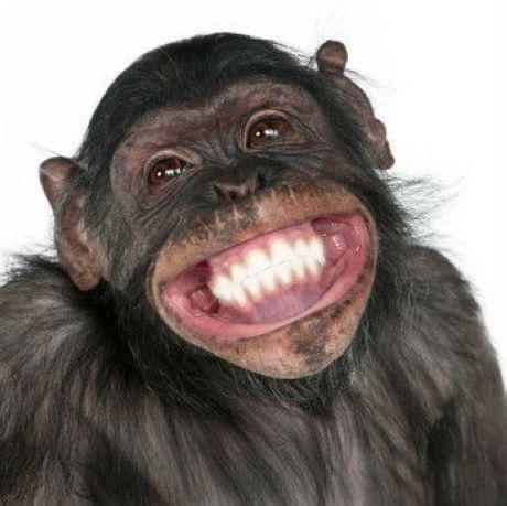 Animal #Smiles www.loudounorthodontics.com @Loudoun Orthodontics ...