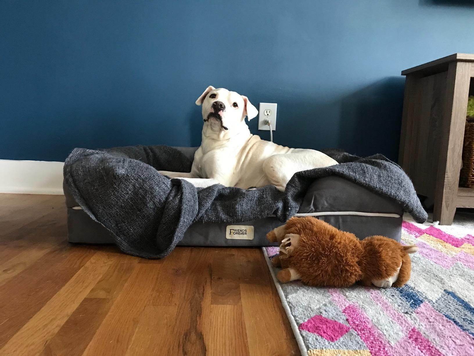 Designed with extra care your pet's comfort is our ...