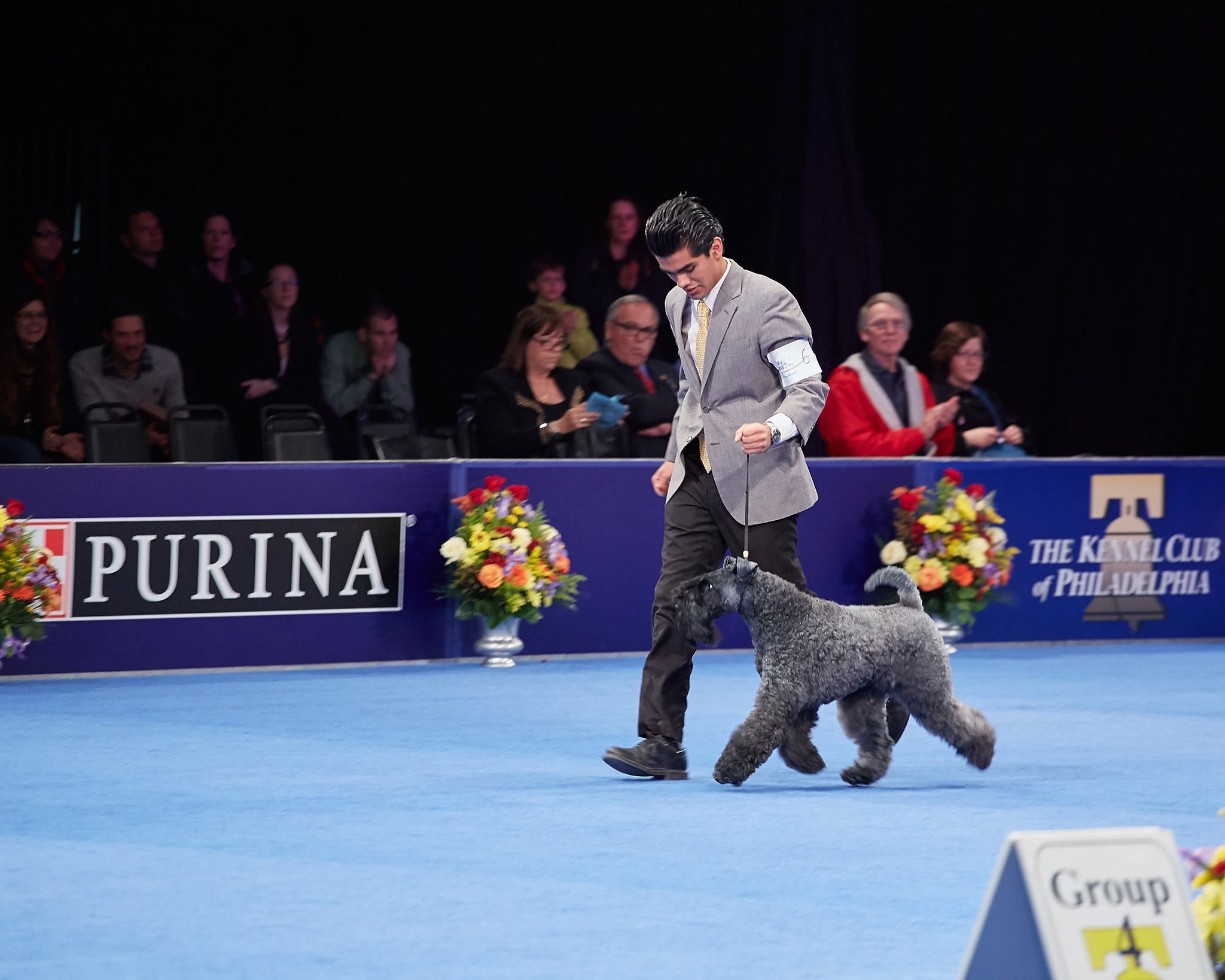 Pin by lanta lin on kerry blue terriers with images