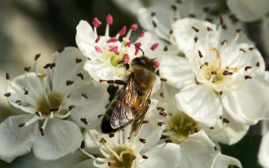 The Best Spring Flowers And Plants To Attract Bees 400 x 300