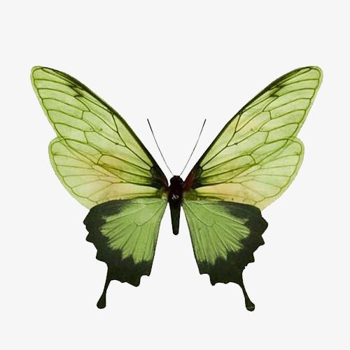 Green Butterfly Butterfly Clipart Green Butterfly Png Transparent Clipart Image And Psd File For Free Download Butterfly Clip Art Insects Beautiful Butterflies
