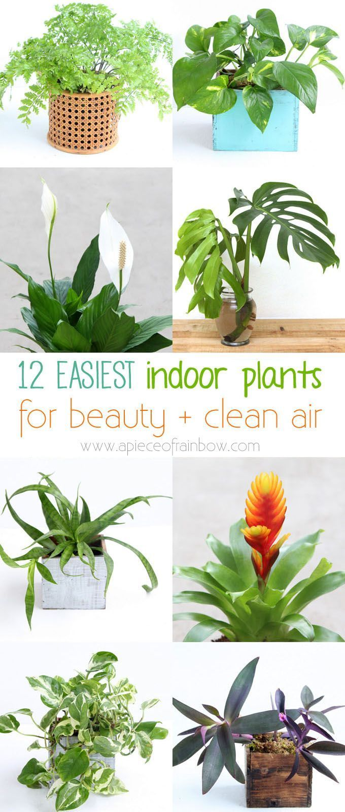 Garden Inspiratie 12 easiest beautiful indoor plants to grow! NASA studies show they are super effective at cleaning air and removing toxins from indoor environments. - A Piece Of Rainbow #indoorplants #houseplants #gardening #gardeningtips #urbangardening #gardendesign #gardenideas #containergardening #diy #bohemian #bohemiandecor #bohochic #boho #homedecor #homedecorideas #wellness #bedroom #livingroom #farmhouse #farmhousestyle #farmhousedecor.Garden Inspiratie  12 easiest beautiful indoor pl