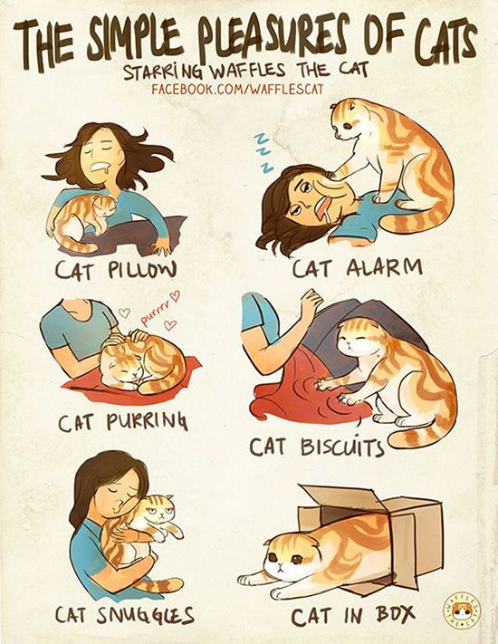 10 Comics Every Cat Owner Will Understand | Petcub