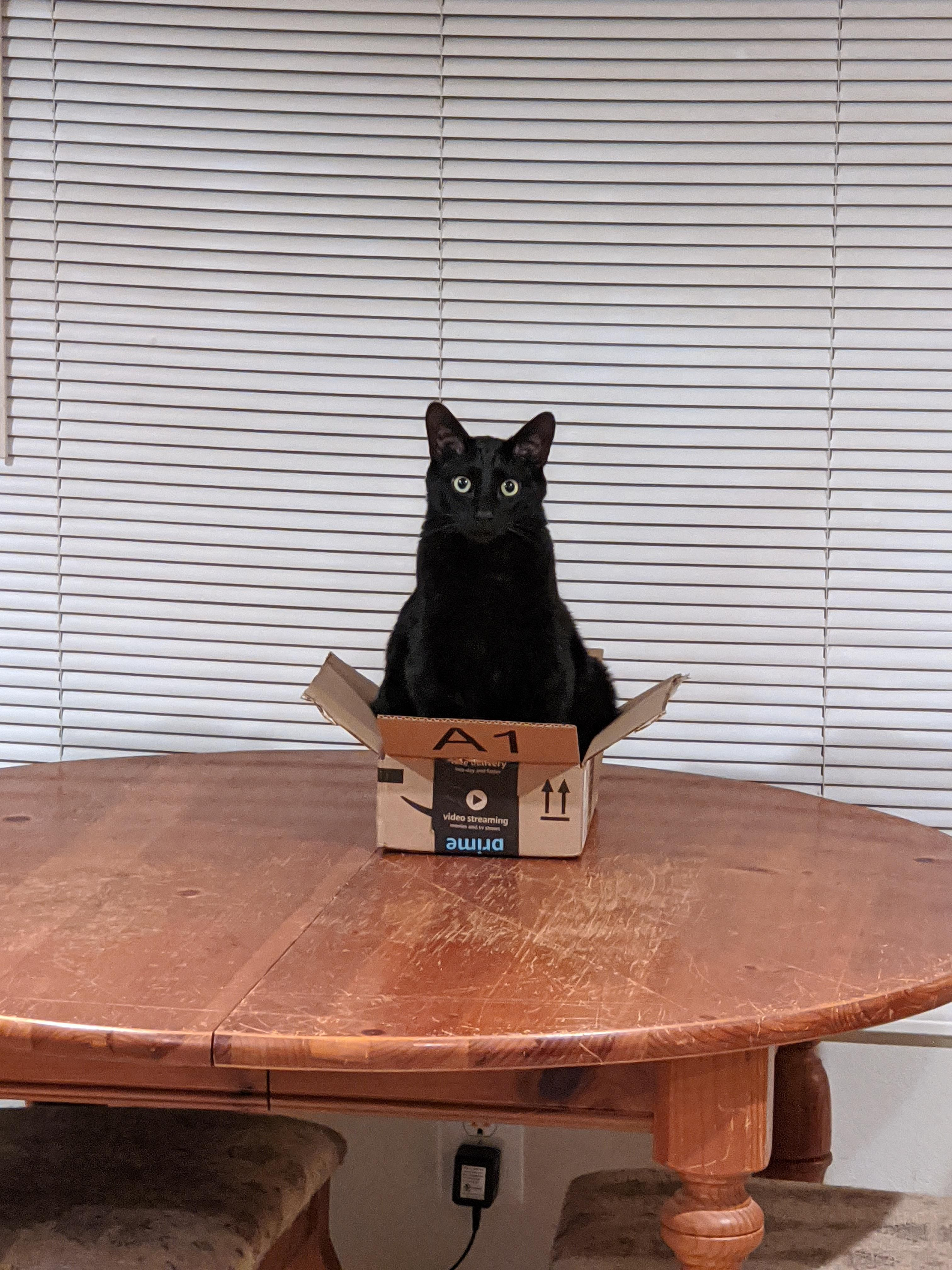 He Fits He Sits In 2020 Cats And Kittens Great Cat Cats